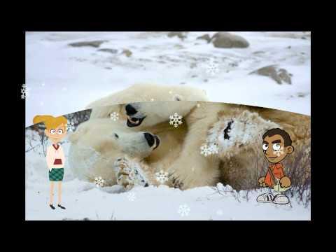 how to get a polar bear patronus quiz