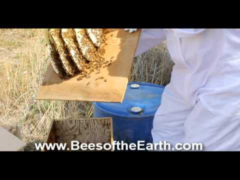 Honey bee trap out youtube