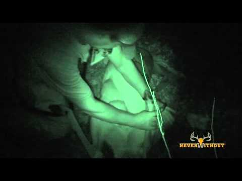 How to gut a deer at Night. Never without nighttime field dressing.