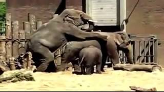 Different Animals Mate   Mating Compilation   Close Up   YouTube Segment 0 x264