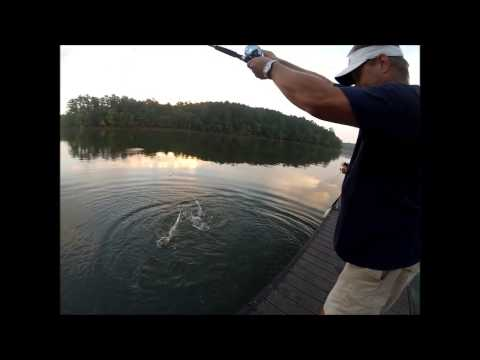Gar Fishing Lake Allatoona