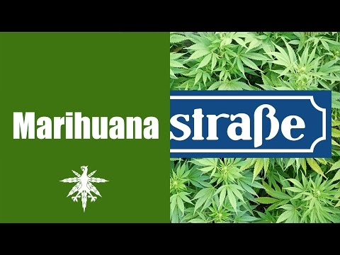 Hanf Beimer - medical marijuana erobert die Lindenstraße | DHV News #83