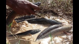 Amazing Fishing Videos Catch A lot Of Fish By Hunting Fish Trap-Traditional Deep Hole Fishing Trap