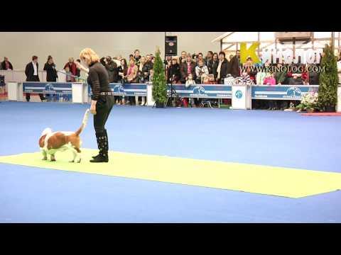 16 Dog Show Eurasia  2012 / Russia / Moscow. Freestyle.