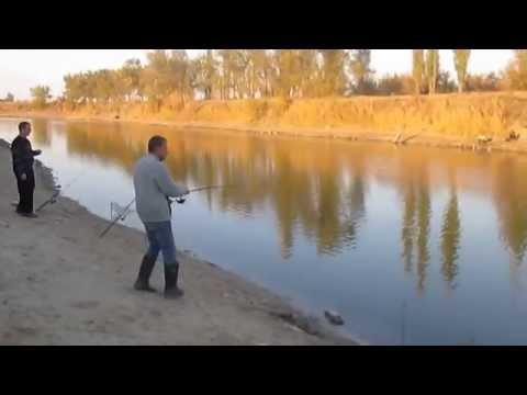 цымла 2017 рыбалка