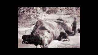 Paranormal Creatures Cryptids Mythical Monsters