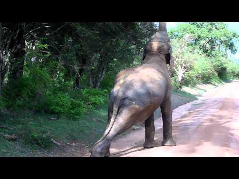 Sri Lanka Safari Yala National Park II 2010 11
