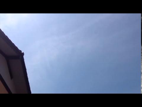 Hadas voladoras programadas para la autodestrucción
