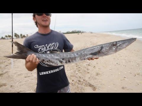 Extreme Kayak Shark Fishing Bait