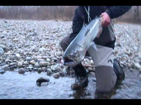 Northwest Winter Steelhead Fishing In Washington
