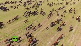 Scene of numerous horses running amazes tourists in northwest China's Xinjiang