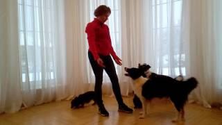 Metoda przywołania psa. - POZYTYWNE SZKOLENIE PSÓW