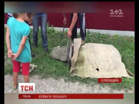 У селі Шманьківчики на емоціях провели операцію  перехоплення чупакабри