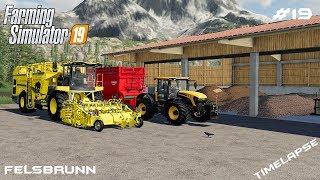 Harvesting sugar beets and potatoes | Animals on Felsburnn | Farming Simulator 19 | Episode 19