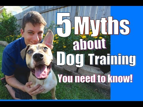 5 Myths About Dog Training You Need To Know! video