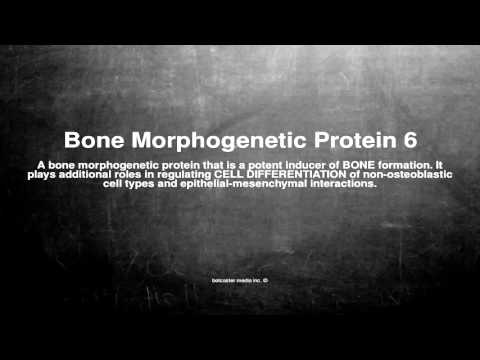 Medical vocabulary: What does Bone Morphogenetic Protein 6 mean