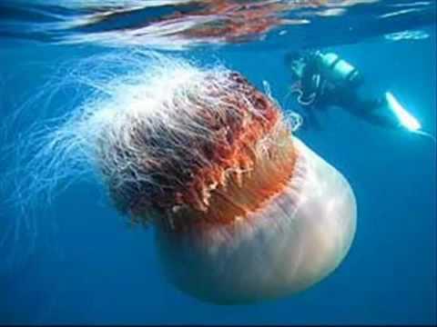 Sirenas Encontradas en