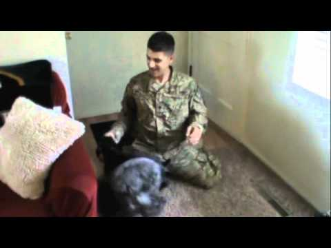 Mini Schnauzers welcoming home soldier