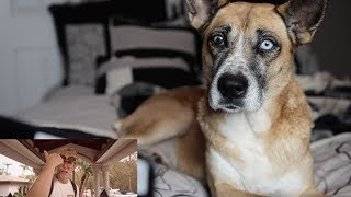 My Dog Reacts to 'It's Everyday Bro' remix by JAKE PAUL ft. Gucci Mane