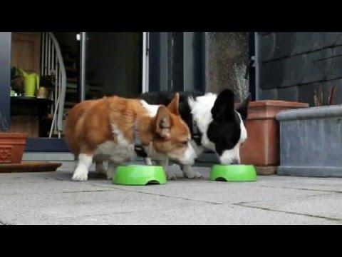 Tiere lieben kalkfreies Wasser