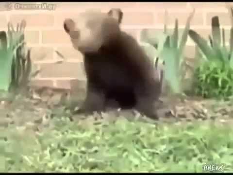 подборка приколов с животными 2013 Юмор! Прикол! Смех