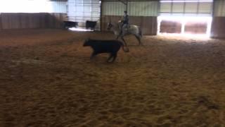Misty- Jared Lesh Cowhorses