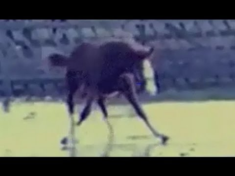 Can't Touch This (Horse Edition)