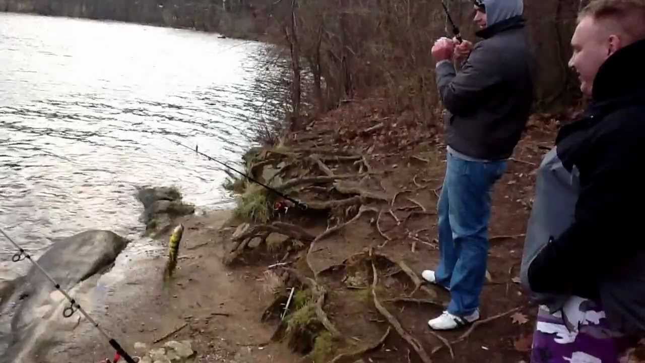 ловить налима на каме