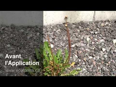 Vinaigre horticole youtube - Tuer les mauvaises herbes javel ...