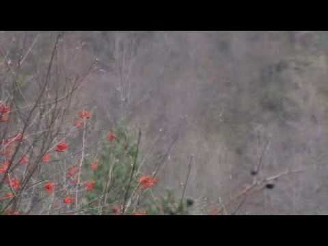 jolie-chasse-au-sanglier.html