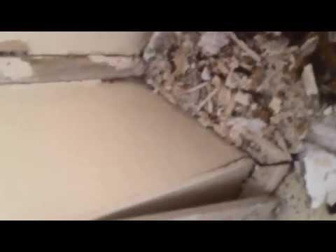 Water Damaged Plaster Ceiling and Cornice Repair