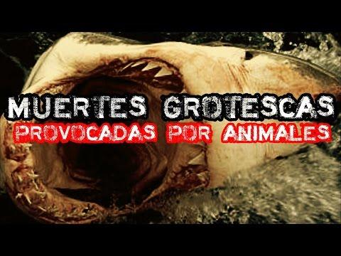 Top: Las 6 Muertes más Grotescas provocadas por Animales