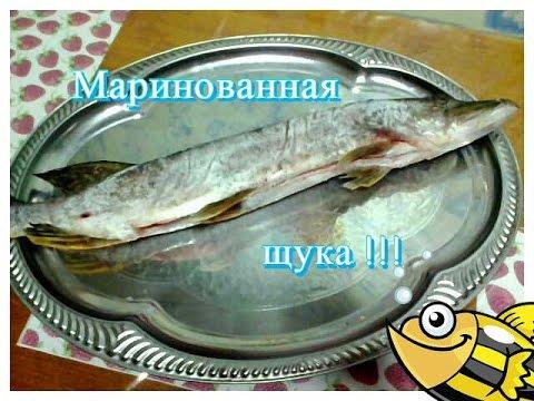 у козы мастит... airservice55.ru