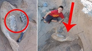A Boy Fell While Hiking And Discovered A Million Year Old Stegomastodon!