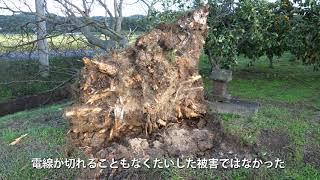 台風24号 伊達市被害