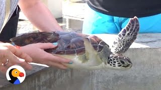 Popular Turtle Farm Is a Nightmare for Animals | The Dodo