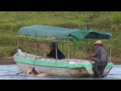 Animal Cruelty---Transporting a Cow from One side of the river to the Other!!!