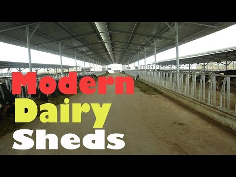 Dairy Shed: Modern Dairy Shed - Hindi (2015)