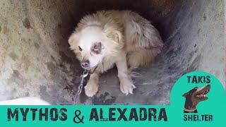 Takis Shelter - (Chained Dogs) Mythos & Alexandra