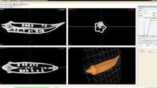 オクラ:ブツ切り動画