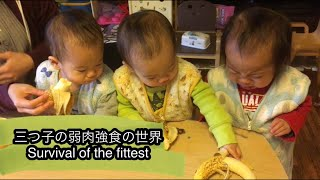 三つ子の弱肉強食の世界 Survival of the fittest with triplet babies.