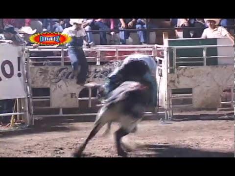 15 toros Rancho la Candelaria en Amacuzac,Mor