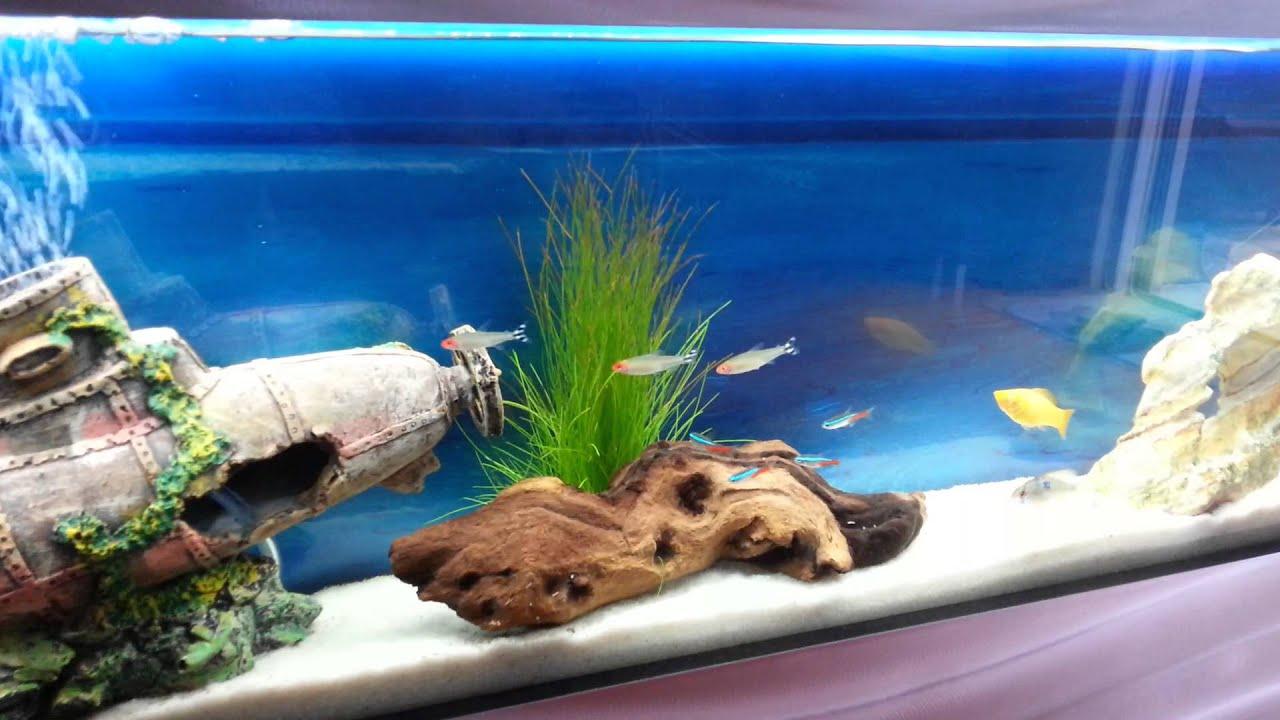 Wall Mounted Aquarium Fish Tank Tropical Fish Plasma Style