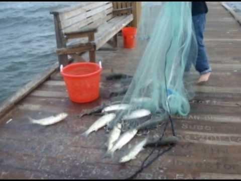 ACTION-PACKED CASTNETTING mullet cast net fishing atarraya pesca