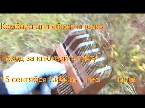 Поход в лес за ягодой клюквой 15 сентября 2017 Сибирь природа туризм тайга охота выживание в дождь