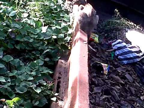 Anak Sma Mesum Di Hutan video