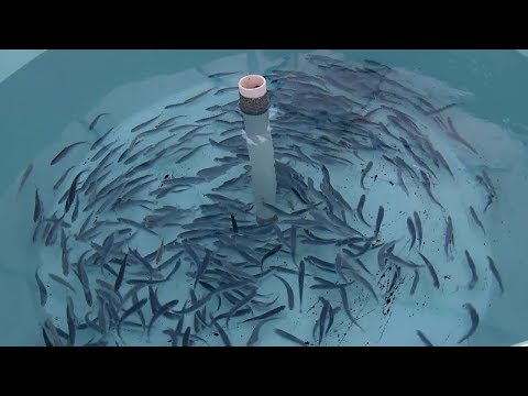 Closed containment - The future of fish farming