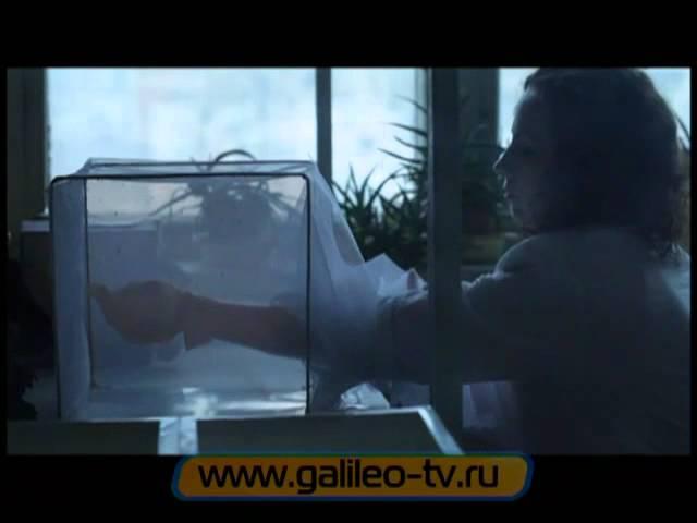 Галилео. Комары