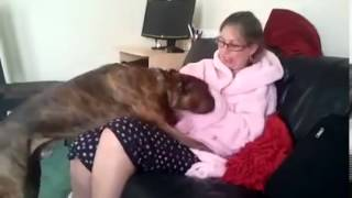 Dog sex with woman funny
