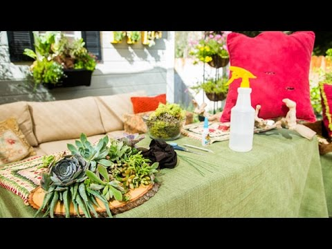 Shirley Bovshow's DIY Succulent Pillows